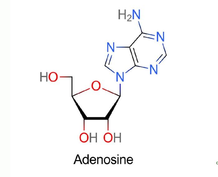 adenosine là gì, adenosine trong đông trùng hạ thảo, hàm lượng adenosine trong đông trùng hạ thảo