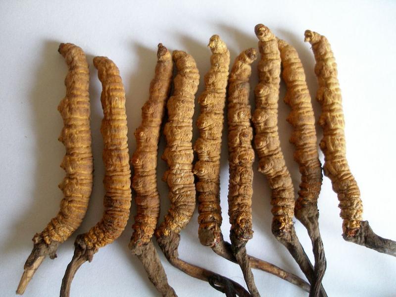 cách nấu chè dưỡng nhan có đông trùng hạ thảo, đông trùng hạ thảo nấu chè dưỡng nhan