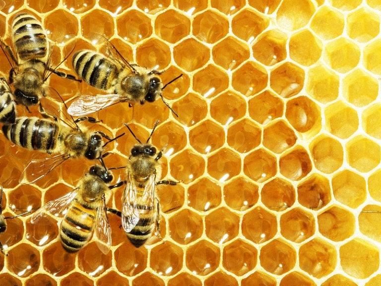 đông trùng hạ thảo ngâm mật ong, cách ngâm đông trùng hạ thảo với mật ong, đông trùng hạ thảo tươi ngâm mật ong, tác dụng của đông trùng hạ thảo ngâm mật ong, cách ngâm đông trùng hạ thảo tươi với mật ong, cách sử dụng đông trùng hạ thảo ngâm mật ong, đông trùng hạ thảo ngâm mật ong de được bảo lâu, đông trùng ngâm mật ong, đông trùng hạ thảo ngâm mật ong có tác dụng gì, cách dùng đông trùng hạ thảo ngâm mật ong, tac dụng đông trùng hạ thảo ngâm mật ong, đông trùng hạ thảo khô ngâm mật ong, nấm đông trùng hạ thảo ngâm mật ong, cách ngâm đông trùng hạ thảo khô với mật ong, đông trùng hạ thảo ngâm rượu mật ong, công dụng đông trùng hạ thảo ngâm mật ong, cách làm đông trùng hạ thảo ngâm mật ong, cách uống đông trùng hạ thảo ngâm mật ong đúng cách, hướng dẫn ngâm đông trùng hạ thảo với mật ong, đông trùng hạ thảo ngâm mật ong có tốt không, cách ngâm rượu đông trùng hạ thảo với mật ong, ngâm đông trùng hạ thảo tươi với mật ong, cách chế biến đông trùng hạ thảo ngâm mật ong, đông trùng hạ thảo ngâm với mật ong, đông trùng hạ thảo ngâm mật ong tác dụng gì, cách làm đông trùng hạ thảo tươi ngâm mật ong, cách ăn đông trùng hạ thảo ngâm mật ong, đông trùng hạ thảo ngâm mật ong bao lâu thì dùng được, đông trùng hạ thảo ngâm mật ong uống như thế nào, cách dùng đông trùng hạ thảo tươi ngâm mật ong